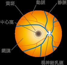 症 高血圧 性 網膜